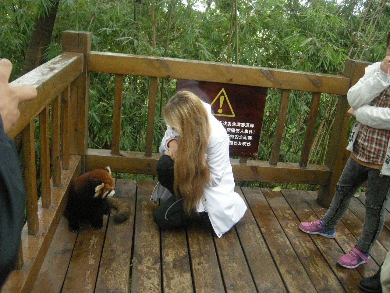 Our Italian Guests Visit Giant Panda
