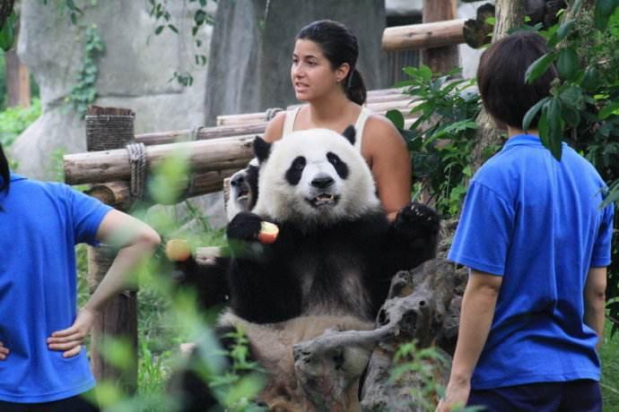 Explore China Tibet Giant Panda travel
