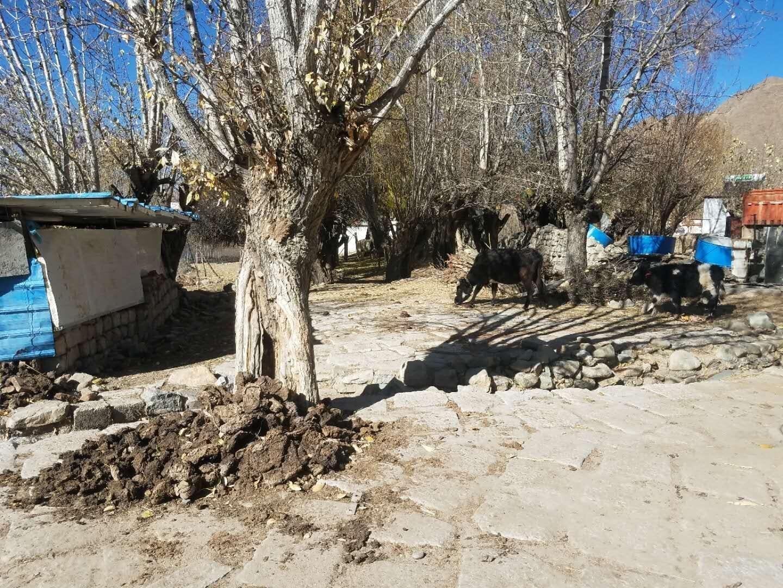 Tibetan Charity Tour-Tibetan Home Visit 8