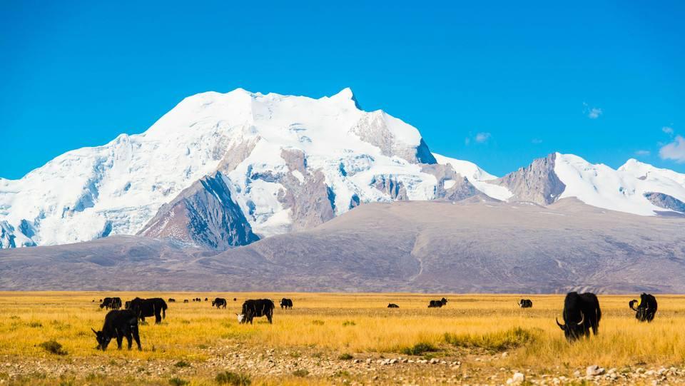shishapangma tibet