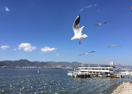 1 Day Kunming Highlights Tour Featured