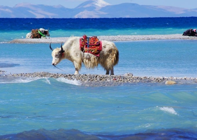 1 Day Namtso Lake Day Tour Featured