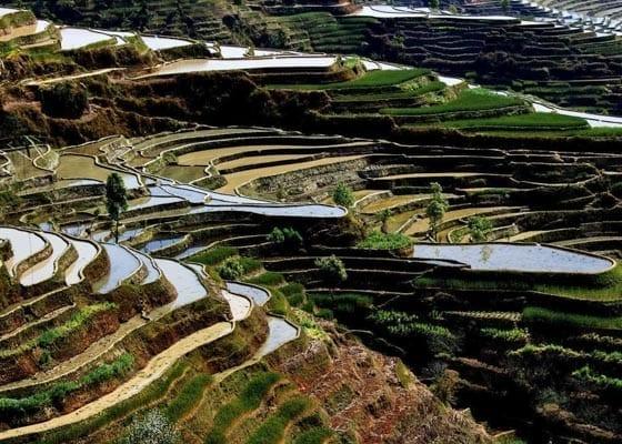 1 Day Yuanyang Bada Hani Rice Terraces Hiking Tour Featured