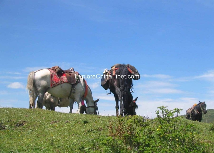 5 Days Sichuan Songpan Horse Riding Tour 2