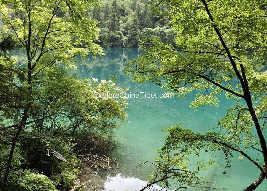 Jiuzhaigou Day tour-Panda Lake